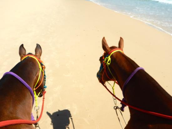 Rainbow Beach Horse Rides: Our noble steeds