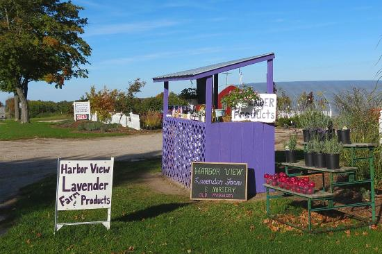 Harbor View Nursery & Lavender Farm