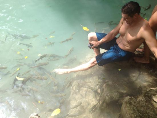 fish pedicure at erawan falls picture of erawan falls
