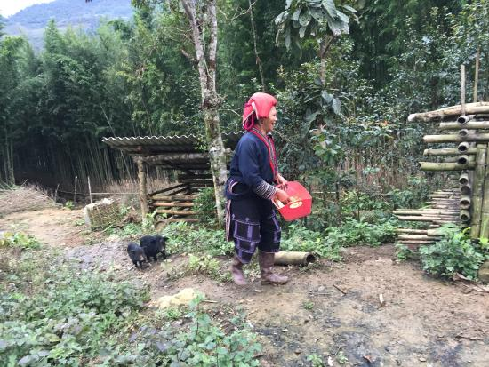 Ms. May Kieu's Homestay: May Kieu's mother feeding her piglets up in the mountains (2km from May Kieu's home)