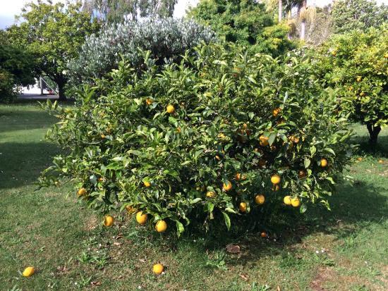 Lupton Lodge : Orchard