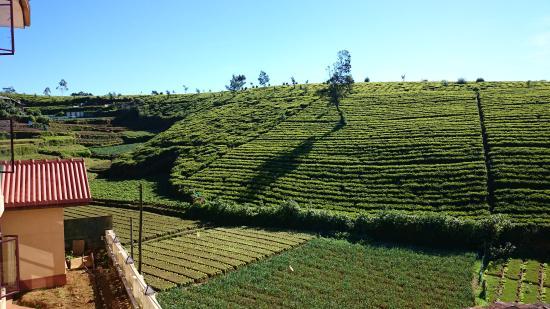 The leisure village Nuwara Eliya : View of Pedro Estate from the hotel restaurant