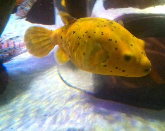 The Sea Life Centre, Manchester. - Picture of Sea Life Manchester ...