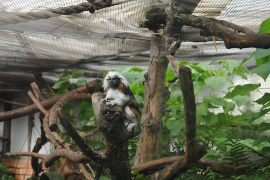 Butterflies for Africa: Tamarin Monkey