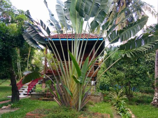 Les Manguiers: paysage tropical