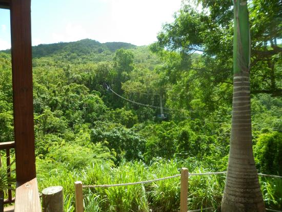 Antigua Rainforest Canopy Tour : The last zipline we did