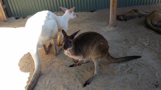 Wildlife Tours Australia: Maru wildlife park