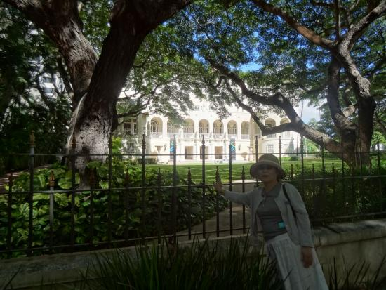 Hawaii State Art Museum: 緑の向こうに白亜の
