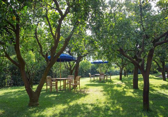 Citrus Garden- relax area - Picture of Hilton Sorrento Palace ...