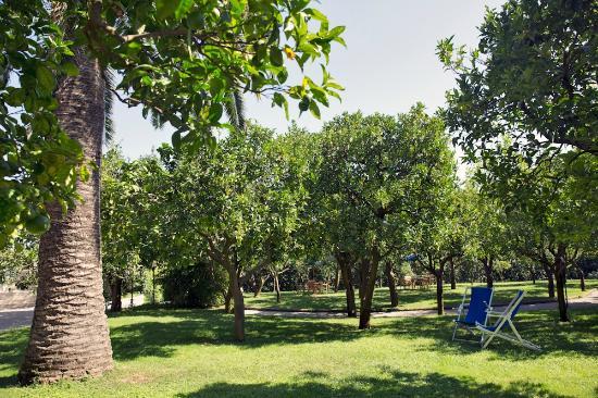 Citrus Garden - Picture of Hilton Sorrento Palace, Sorrento ...
