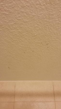 Albuquerque Marriott Pyramid North : Room 211 Pubic Hair on shower ceiling
