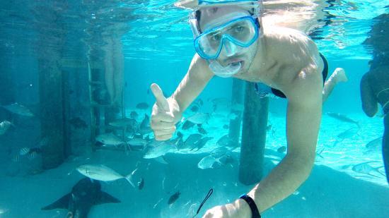 bagno con gli squali - picture of coral gardens, great exuma