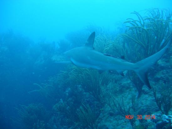 Zatoka Simpson, Sint Maarten: Dive Adventures