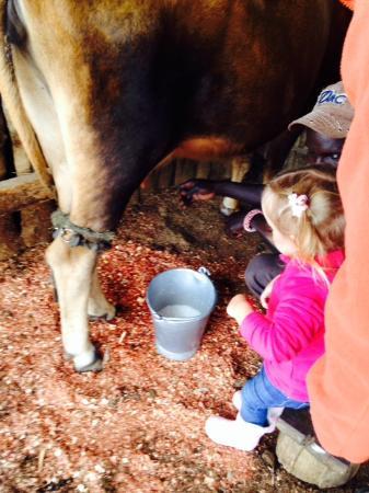 Malu: Milking time