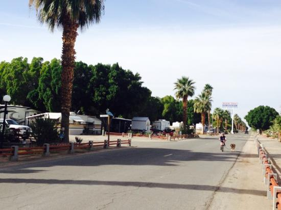 Winterhaven, CA: Main road through RV park