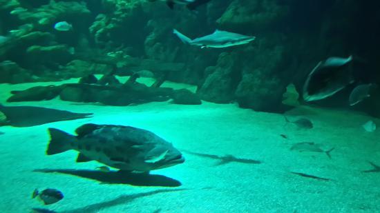 Fakieh Aquarium: ?????