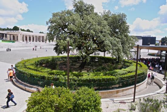 Shrine of our Lady of the Rosary of Fatima: Azinheira, local da aparição da Nossa Senhora