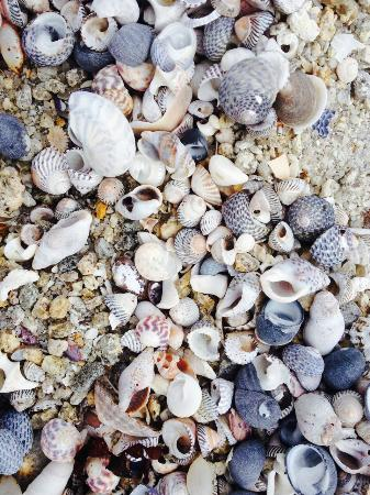 Bicheno Hideaway: The beach had beautiful shells on it, a stone's throw from our deck