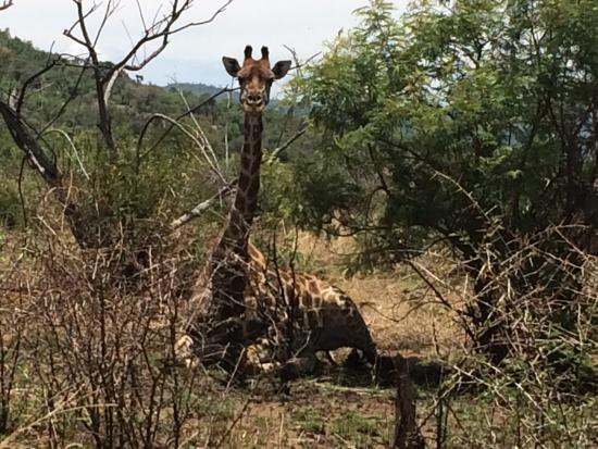 Ekala Eco Tours: Pilanesberg National Park