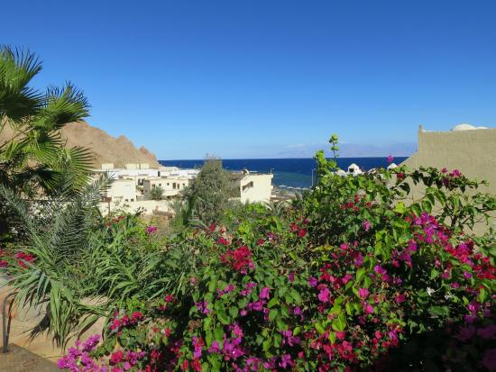 The Bedouin Moon Hotel: View of beach from gardens