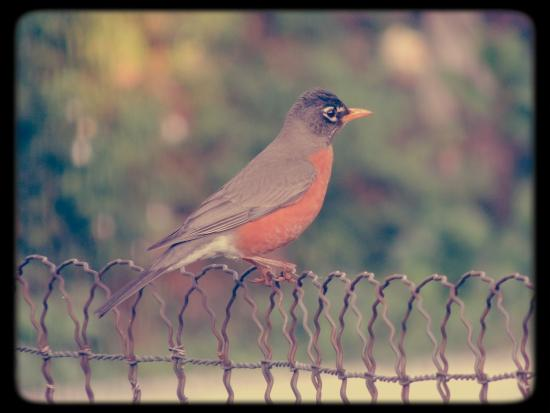 Hyatt Place UC Davis: bird