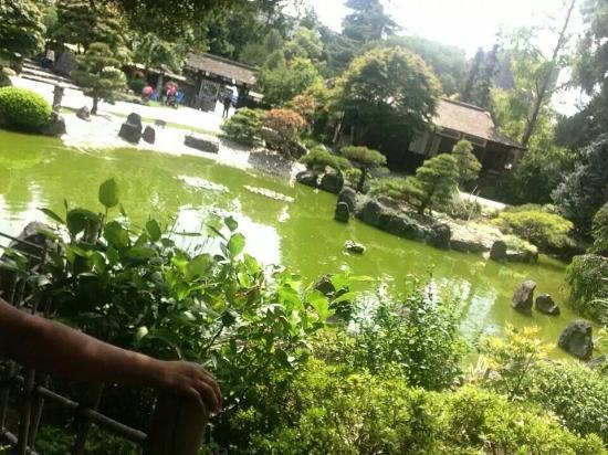 The San Mateo Japanese Garden : fish