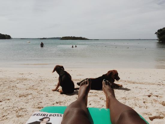 Half Moon Bay: Friendly dogs