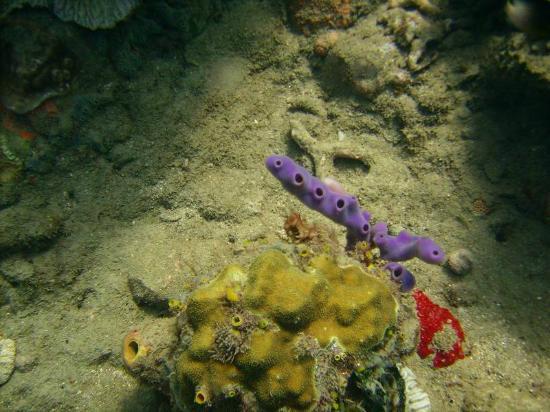 Dive Fair Helen: Typical vivid colours