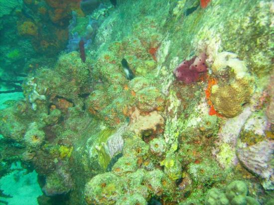 Dive Fair Helen: great dives