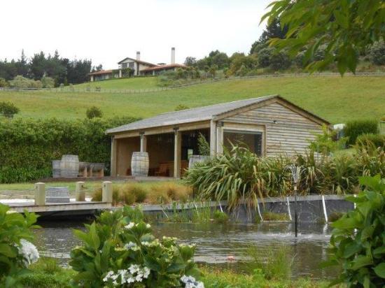 Mercury Bay Estate : Backyard