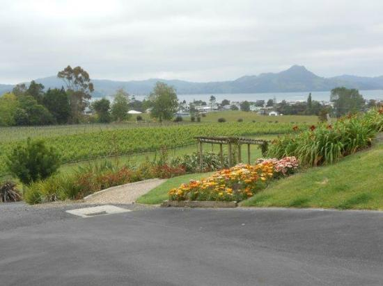 Mercury Bay Estate : Garden & grapes