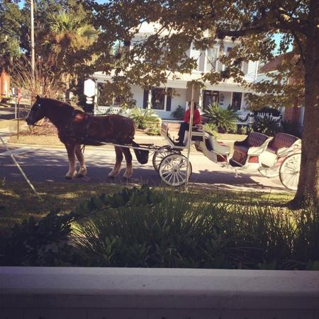 Amelia Island Carriages: Great time!