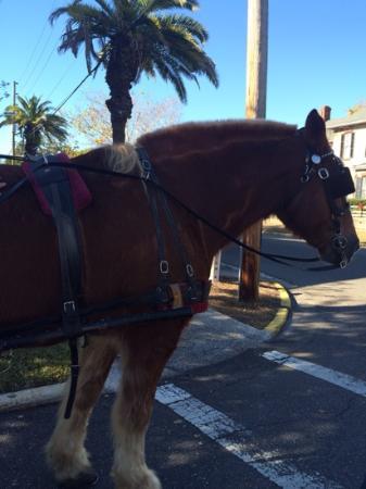 Amelia Island Carriages: Beautiful horse