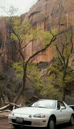 Pa'rus Trail: Old scotty dog likes. Zion in spring