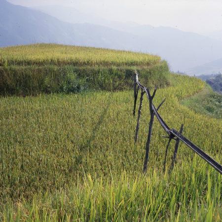 Dragon's Backbone Rice Terraces : Ins kleinste Detail geplante und organisierte Bewässerung