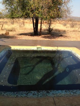 Madikwe Hills Private Game Lodge: Deck and plunge pool