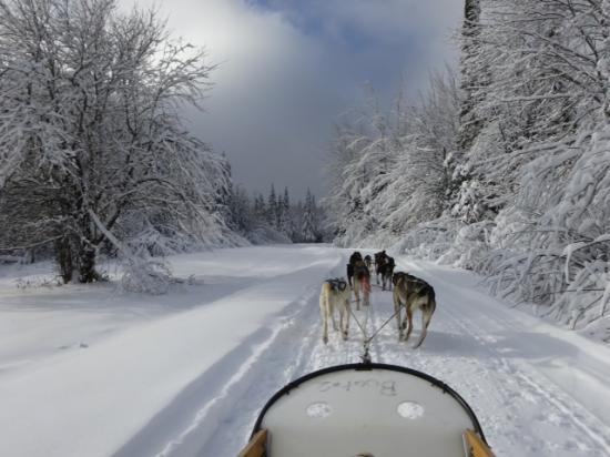 Eden Dogsledding: winter dog sledding