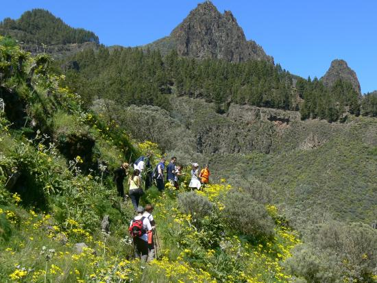 Walk In Gran Canaria - Day Tour