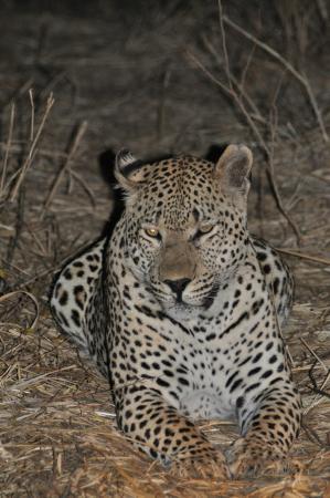 Tydon Bush Camp : Close encounters with a leopard