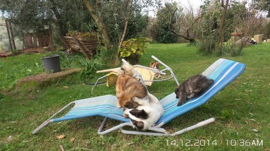Agriturismo Le Caselle: per chi ama gli animali....