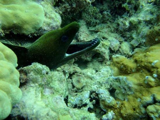 Rainbow Scuba Hawaii: Lots of great pictures