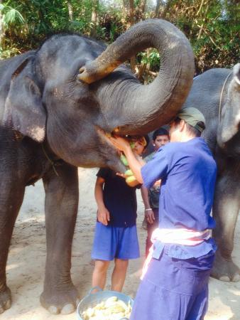 Elephant Carer Home
