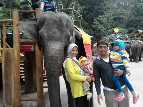 Cisarua, Indonésia: Seruuu... bisa foto n naik gajah di taman safari