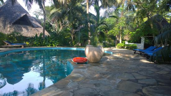 Shambani Cottages: Pool area