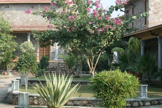 The Jhadol Safari Resort: Beautiful Platation in property