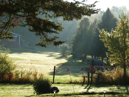 Firefly Bed and Breakfast: View of our grounds