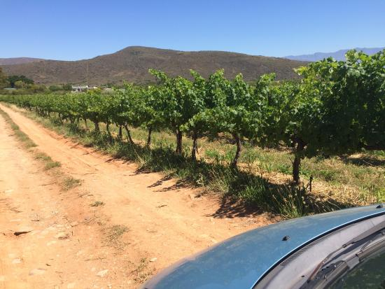 Tanagra Wine + Guestfarm: Driving though the vines