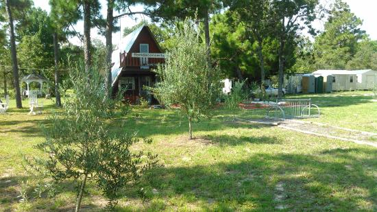 Brooksville, FL: Front section of the olive orchard