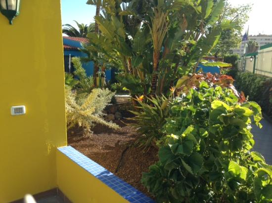 Tropical La Zona: wel planted gardens   outside  our bungalow
