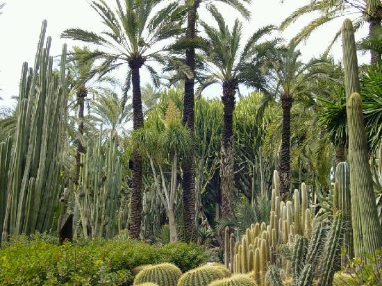 Elche - Imperial Palm - Foto di Palm Groves (Palmeral) of Elche, Elche - Trip...